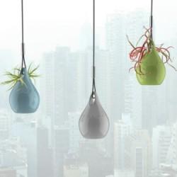 Oczyszczanie powietrza dzięki roślinom