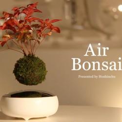 Unoszące się nad doniczką bonsai