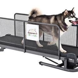 Profesjonalna bieżnia dla psów