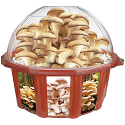 Urządzenie do produkcji grzybów