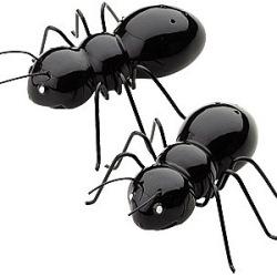 Czarne mrówki przy stole