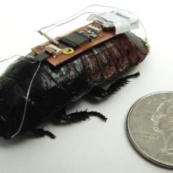 Zdalnie sterowane karaluchy