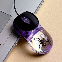 Mysz z pająkiem