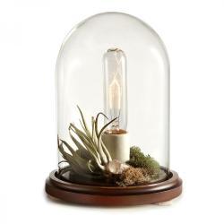 Lampka pełna roślinności